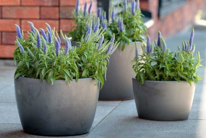 Pflanzen leicht gemacht mit Artstone